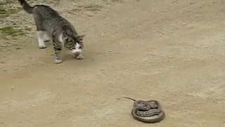 Curiosity Doesn't Kill The Cat