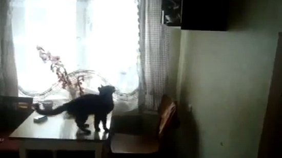 [SCM]actwin,0,0,0,0;cat-tries-to-jump-on-high-shelf.flv