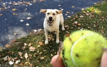 Check Out This Dog Fetching A Ball In A Pile Of Leaves