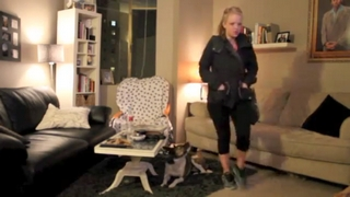 Dog Humps Pillows When Owner Is Away
