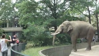 Elephant Doesn't Like This Guy