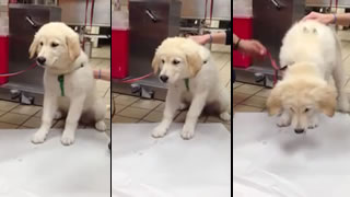 Puppy Pukes Up Surprise