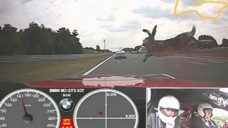 Rabbit Tries To Jump Over Racecar
