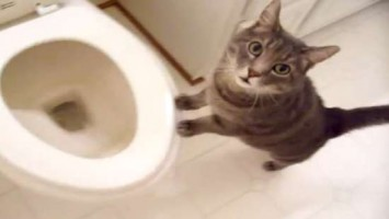 cat who likes to watch the toilet flush - YouTube - Mozilla Firefox